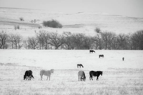 Photograph - Winter Pasture by Jeff Phillippi