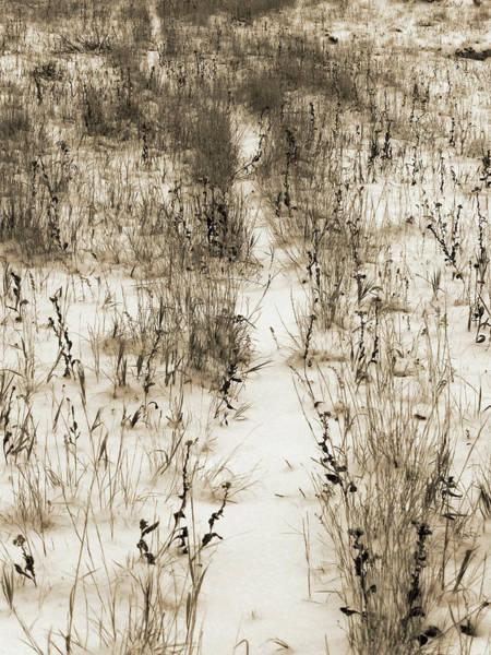 Photograph - Winter Path by Cris Fulton