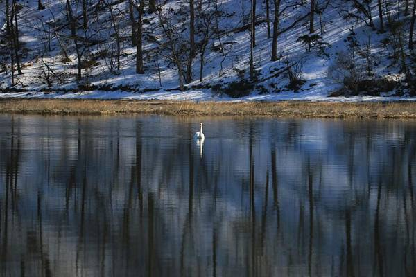 Photograph - Winter Peace by Karen Silvestri