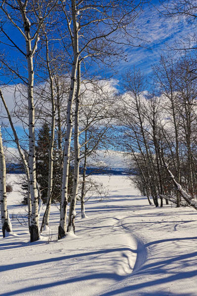 Photograph - Winter Peace by Tom Gresham