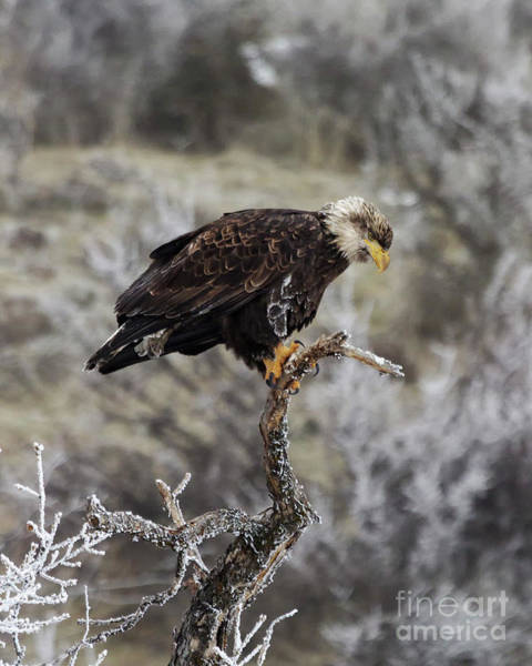 Wall Art - Photograph - Winter Perch by Mike Dawson