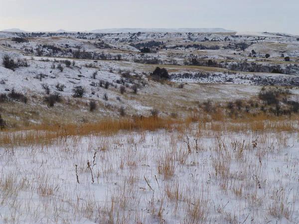 Photograph - Winter Prairie by Cris Fulton