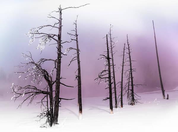 Wall Art - Photograph - Winter Rhapsody by Karen Wiles