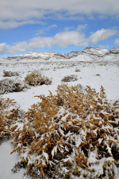 Photograph - Winter Scene At Book Cliffs by Ray Mathis