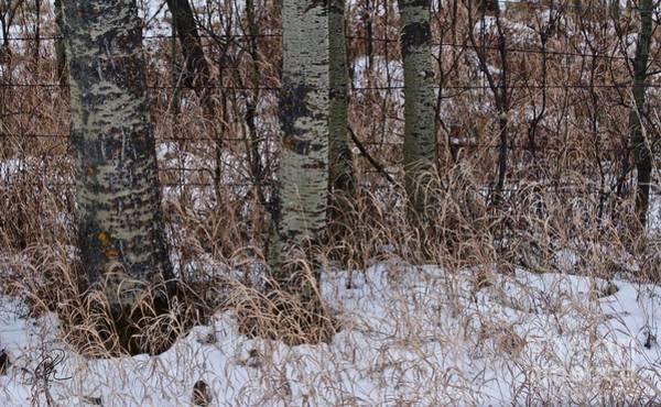 Photograph - Winter Snow Fall Grass by Ann E Robson