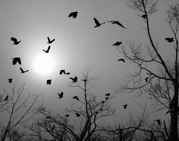 Wall Art - Photograph - Winter Sun Crows by Gothicrow Images