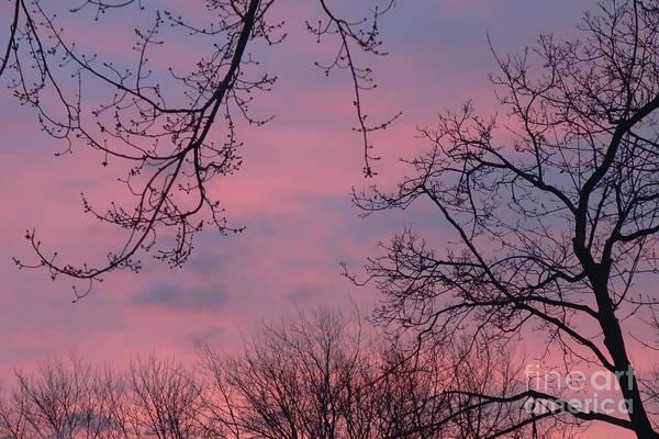 Photograph - Winter Sunrise by Ann Horn