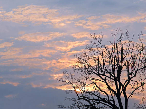 Photograph - Winter Sunrise With Tree Silhouette by Gill Billington