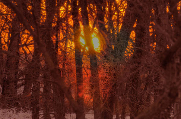 Red Wolf Photograph - Winter Sunset In Forest by Don Wolf