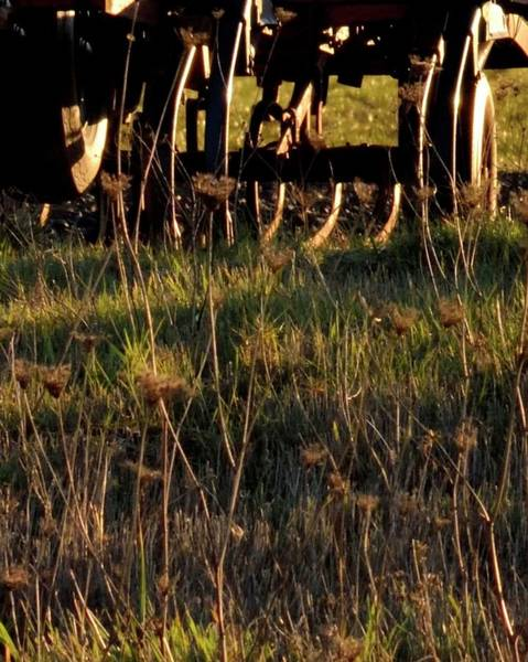 Photograph - Winter Thistles And Cultivator by Jerry Sodorff