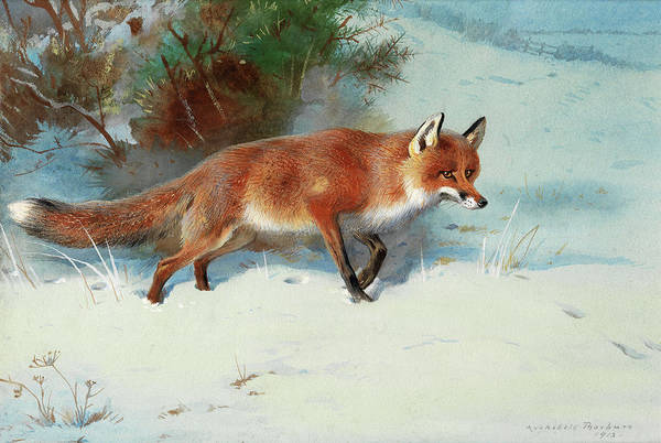 Wall Art - Painting - Winter Tracks by Archibald Thorburn