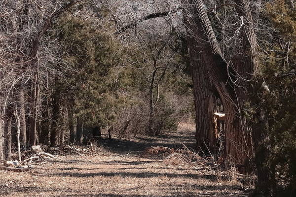 Photograph - Winter Trail 6223 by John Moyer
