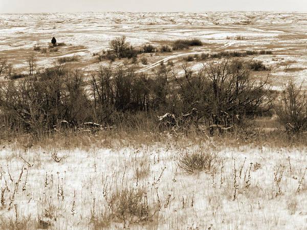 Photograph - Winter Trail by Cris Fulton