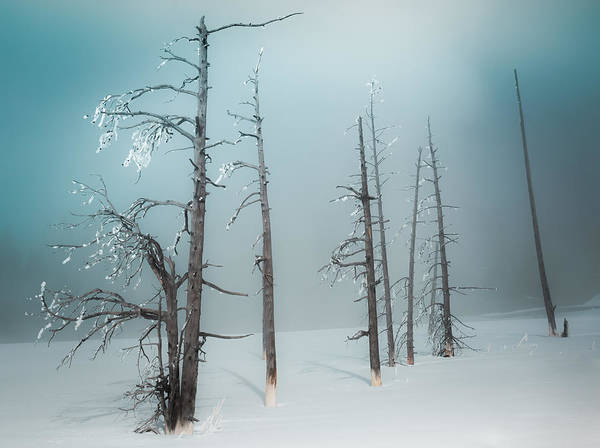 Photograph - Winter Tranquility by Karen Wiles
