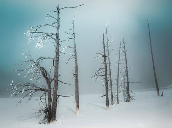 Wall Art - Photograph - Winter Tranquility by Karen Wiles