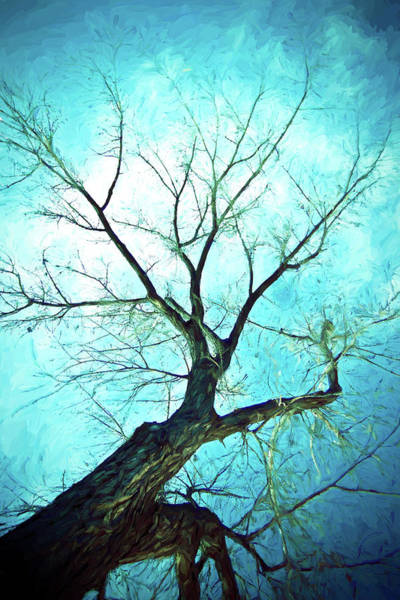 Photograph - Winter Tree Blue  by James BO Insogna