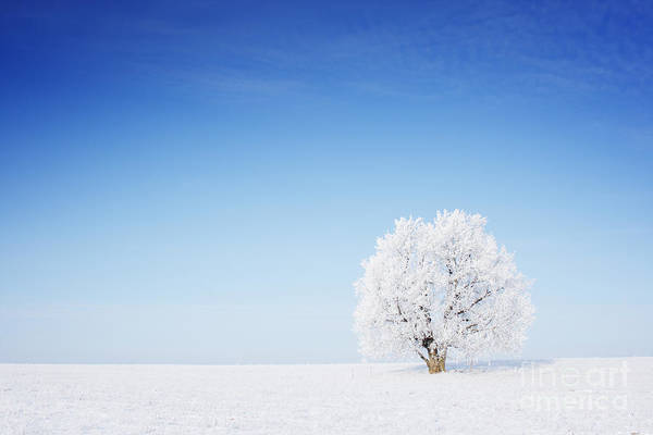 December Wall Art - Photograph - Winter Tree In A Field With Blue Sky by Dudarev Mikhail