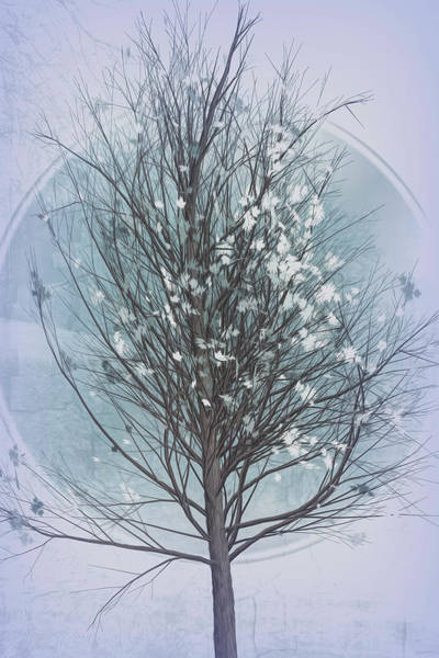 Photograph - Winter Tree In Cool Grays by Debra and Dave Vanderlaan
