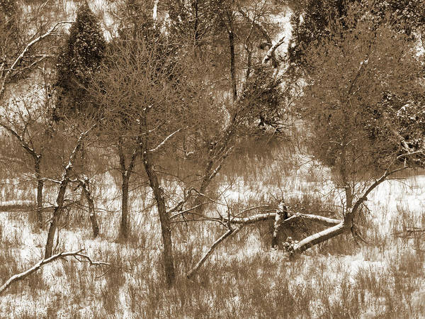 Photograph - Winter Tree Reverie by Cris Fulton