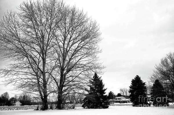 Photograph - Winter Tree Style Bucks County by John Rizzuto