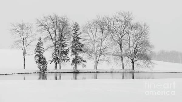 Wall Art - Photograph - Winter Trees by Alan Pelletier