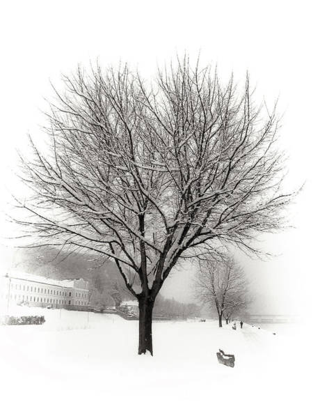 Donau Photograph - Winter Trees Along The Danube At Ybbs by Menega Sabidussi
