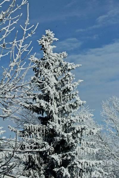 Photograph - Winter Trees by Ann E Robson