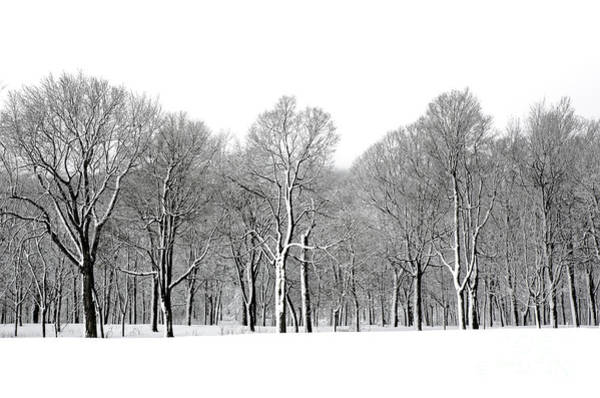Montreal Wall Art - Photograph - Winter Trees In Snow, Montreal by Marc Bruxelle