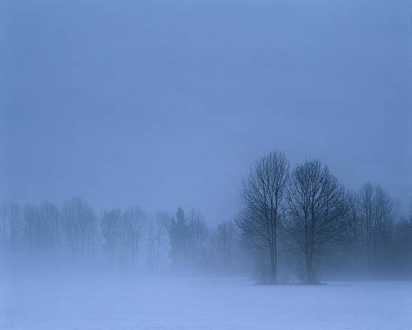 Ljubljana Wall Art - Photograph - Winter Trees In Snowy Field With Low by Connie Coleman