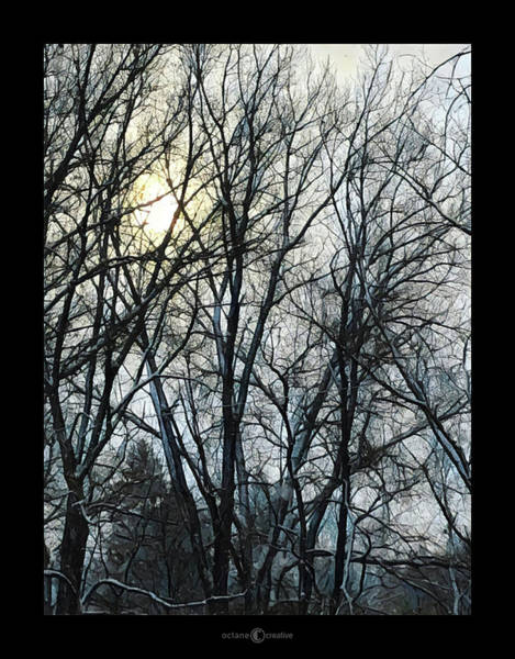 Photograph - Winter Trees Sunrise by Tim Nyberg