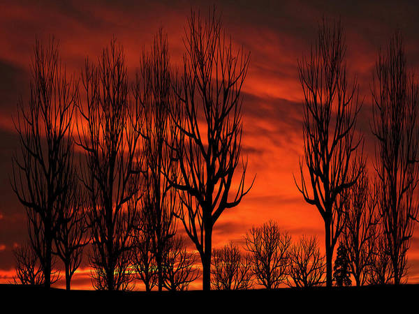 Wall Art - Mixed Media - Winter Trees Sunset Silhouette by David Dehner