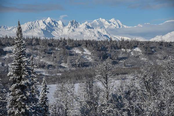 Wall Art - Photograph - Winter Wilderness by Ethan Johnson