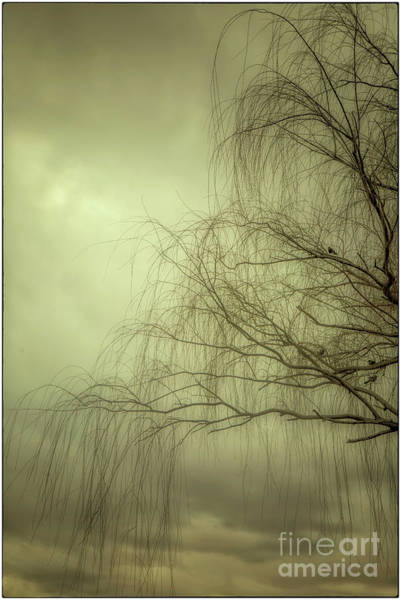 Photograph - Winter Willow by Natural Abstract Photography