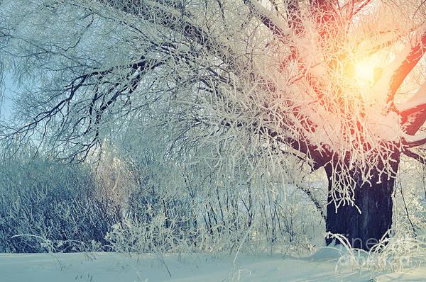 Snowflakes Photograph - Winter Wonderland Picturesque Landscape by Marina Zezelina