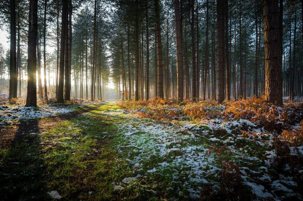 Nottinghamshire Photograph - Winter Woodland Sunset - Strawberry by Lee Warren Photography
