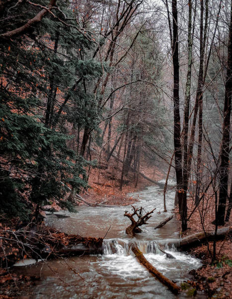 Photograph - Winter Woods by Christopher Brown