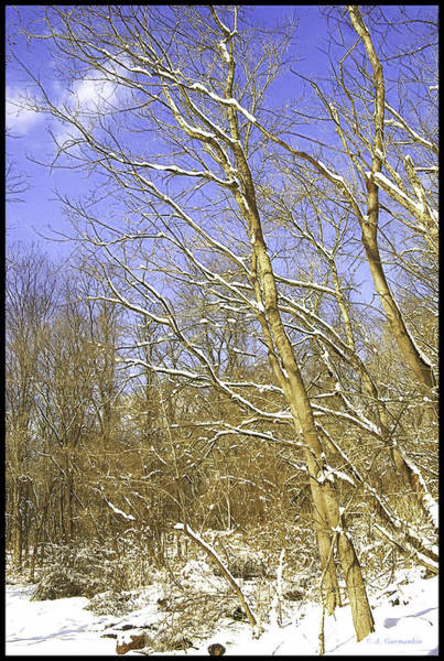 Photograph - Winter Woods In Snow by A Gurmankin