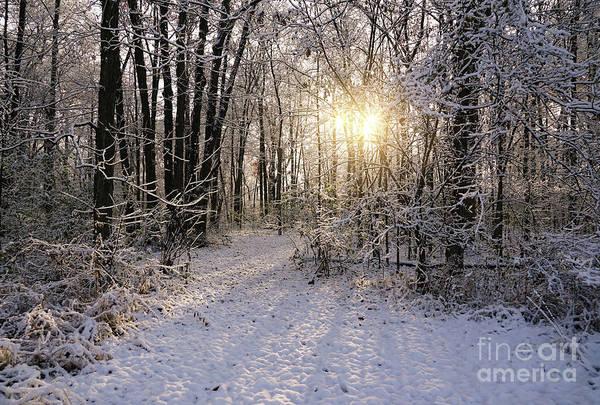 Photograph - Winter Woods Sunlight by Rachel Cohen
