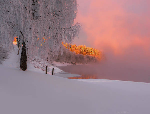 Photograph - Winterlight by Rose-Marie karlsen