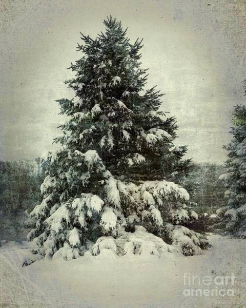 Photograph - Winter's Adornment by Luther Fine Art