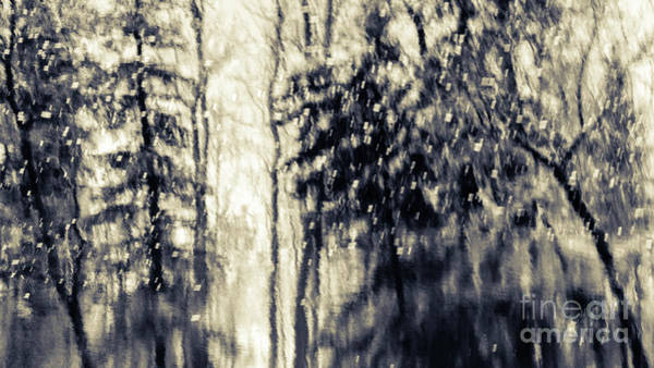 Photograph - Winter's Forest by Lori Dobbs