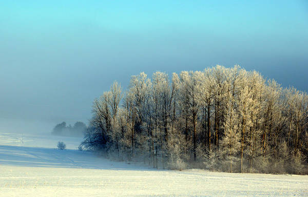 Photograph - Winter's Heavy Frost by SimplyCMB