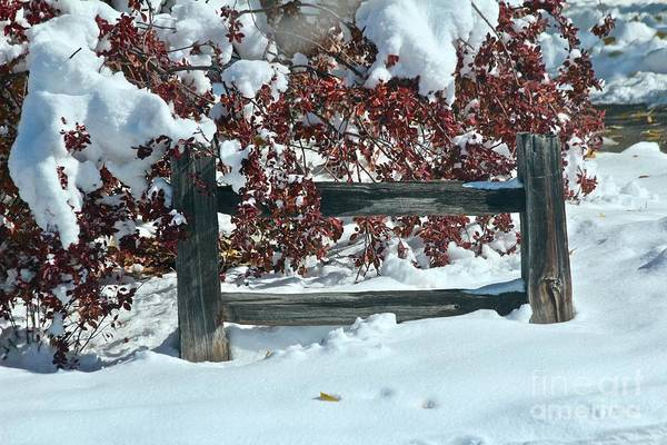 Photograph - Wintery Fall by Ann E Robson