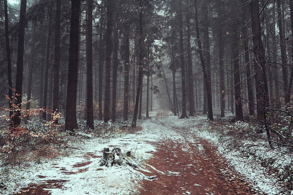 Photograph - Wintry Autumn Woods by Jenny Rainbow