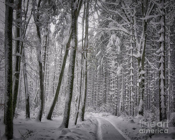 Photograph - Wintry Forest Track by Edmund Nagele