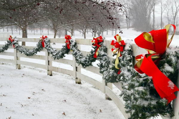 Wall Art - Photograph - Wintry Garland by Beth Collins