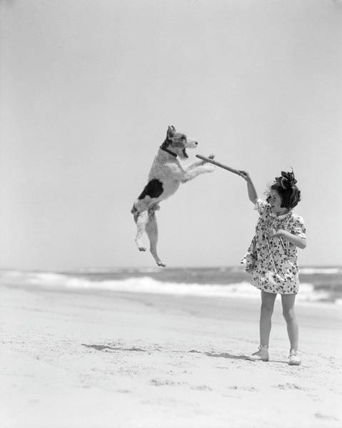 White Dog Photograph - Wire Haired Terrier Dog Jumping In The by H. Armstrong Roberts