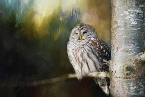 Photograph - Wise Owl by Marilyn Wilson