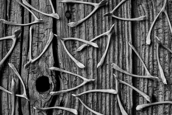 Wall Art - Photograph - Wishbones On Old Boards by Garry Gay