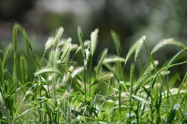 Photograph - Wispy Green 2 by Fraida Gutovich